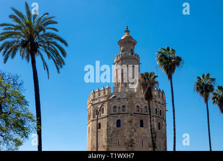 Torre del Oro and palm trees in Seville, Spain - Stock Image