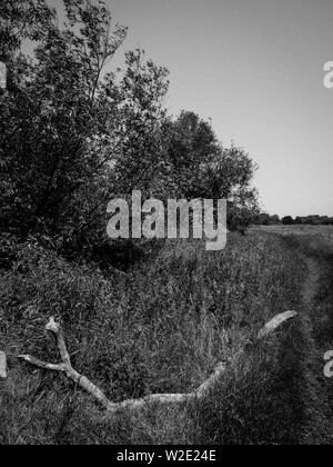 Black and White Landscape, The Ridgeway, Ancient Road, Nr, Little Stoke, Passing Threw Oxfordshire Countryside, Oxfordshire, England, UK, GB. - Stock Image