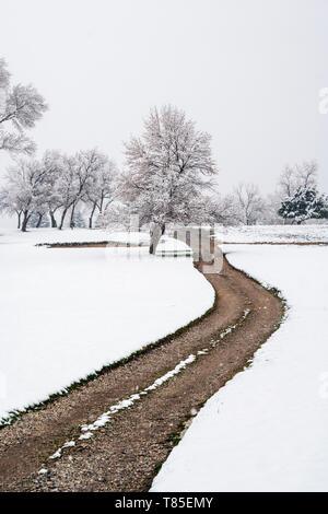 Dirt path winding through fresh May 9th springtime snow - Stock Image