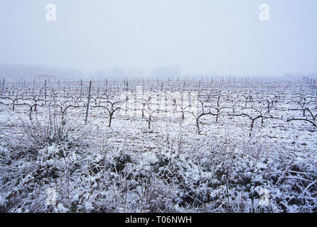 Snow covered vineyards. Navarra, Spain. - Stock Image