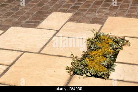 Small planting inset in garden paving to break up the natural stone cobble stone finish a great technique for landscape - Stock Image