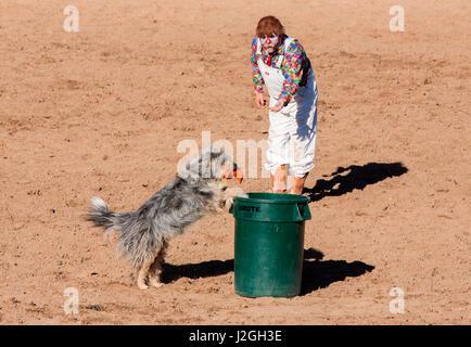USA, Arizona, Buckeye, Hellzapoppin Arena. Clown and dog perform at rodeo. Credit as: Wendy Kaveney / Jaynes Gallery - Stock Image