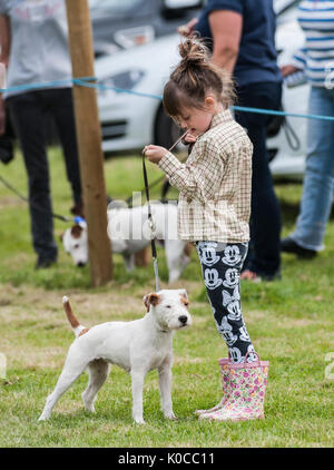 The Barlow Hunt Dog Show - Terrier in the show ring being handeled by a young girl - Stock Image