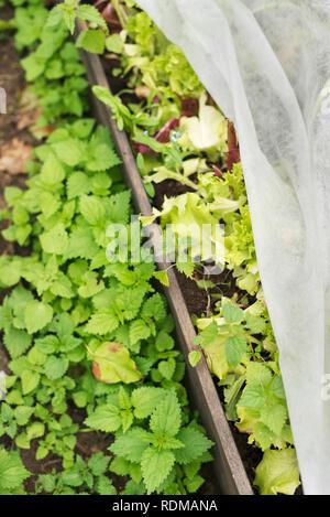 Weeds in garden - Stock Image