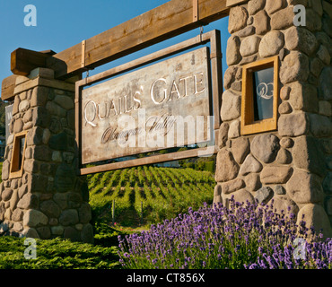 Entrance sign to Quails' Gate winery in Canada - Stock Image