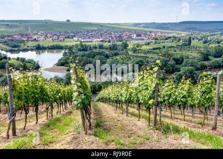 Blick über Weinberg auf Nordheim, Franken, Bayern, Deutschland, Europa, - Stock Image