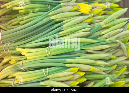 Freshly picked spring daffodils at a market stall - Stock Image