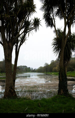 the Lake at Castleward, County Down Northern Ireland - Stock Image