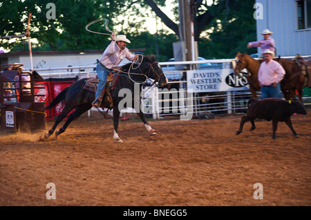 Cowboy roping calf at PRCA rodeo event  in Bridgeport, Texas, USA - Stock Image