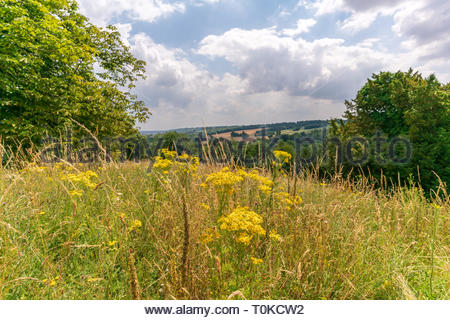 A bright summer day in the Chiltern Hills. - Stock Image