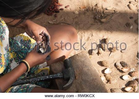Piaraçu village (Aldeia Piaraçu), Mato Grosso State, Brazil. A Kayapo woman breaks open cumaru (Dipterix odorata, Tonka beans) nuts with a hammer and wooden block. - Stock Image
