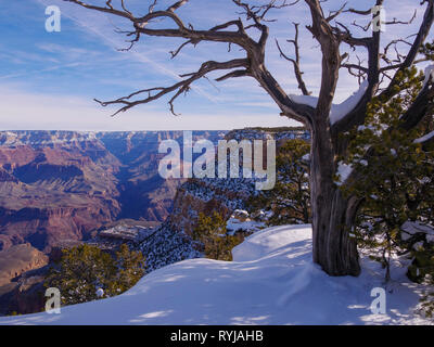 Grand Canyon and pinyon pine in snow. Bright Angel Canyon center left. - Stock Image