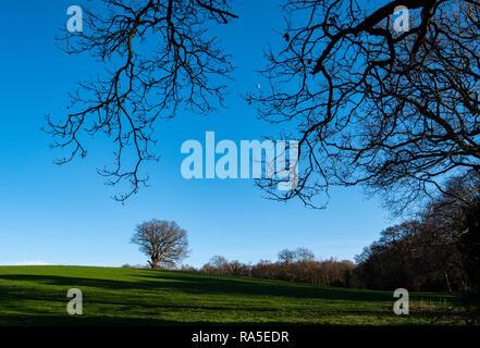 Early Morning, English Winter Landscape - Stock Image