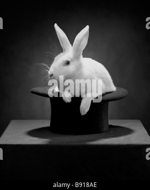 Rabbit in a hat - Stock Image