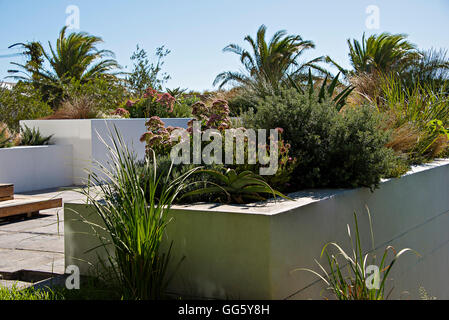 Plants in domestic garden - Stock Image