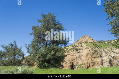 Trees and grass grow in rock valley in the wilderness of southern California. - Stock Image