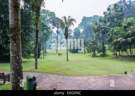 Singapore botanic gardens,palm valley, Singapore - Stock Image