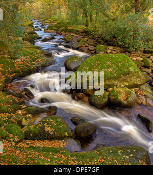 River Aune, during the autumn at Didisworthy Bottom Woods - in Dartmoor National Park - Stock Image