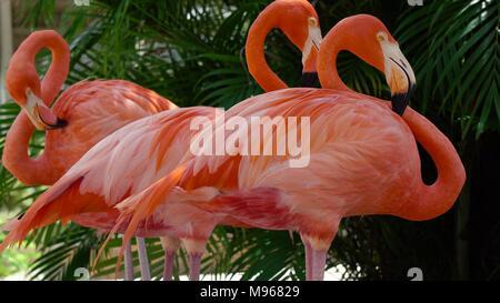 Detail of flamingo head with nice yellow eye - Stock Image