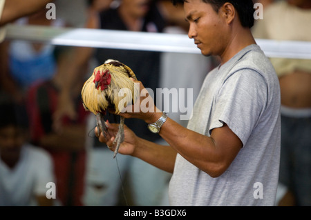 A Filipino unsheathes his fighting cock's blade before a cockfight near Mansalay, Oriental Mindoro, Philippines. - Stock Image
