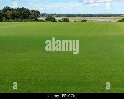 Large area of turf field with river estuary in the far distance - Stock Image
