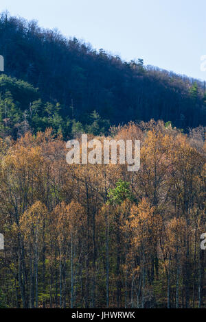 Early Spring in Wears Valley, Tennessee - Stock Image