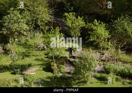 Forest garden, fruit trees with fruit bushes and vegetable beds, Wales UK - Stock Image