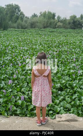 Child girl over invasive water hyacinth, taking over the whole course of Guadiana River, near Badajoz, Spain - Stock Image