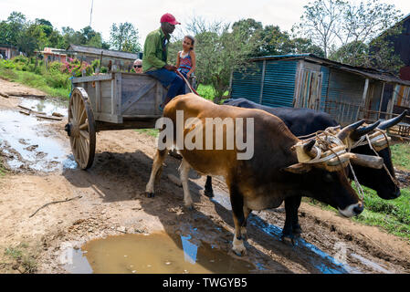 Farm worker travelling  in an an ox cart with child and tourist to tour his tobacco plantation Pinar Del Rio Province, Cuba, Caribbean - Stock Image