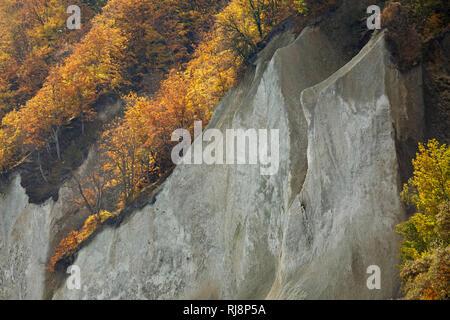 Herbstlich bunter Wald auf den Felsen der Wissower Klinken an der Kreideküste der Halbinsel Jasmund, - Stock Image