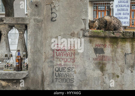 A street cat, anarchist graffiti in Spanish and some empty beer bottles on a wall in central Istanbul. - Stock Image