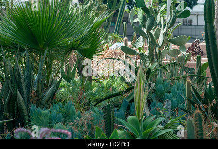 Cactus and succulent garden Photographed in Tel Aviv, Israel in May - Stock Image