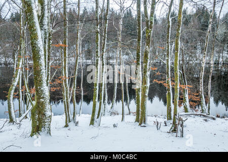 Reflection in Lac de Faux seen through the trees in winter - Stock Image