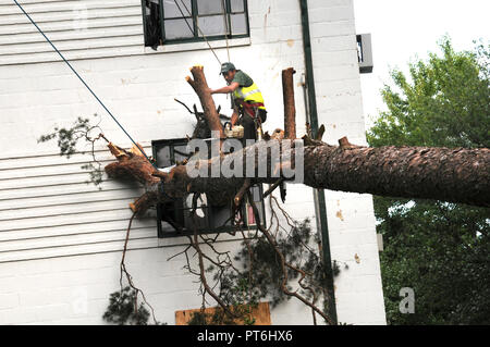 Workers work on removing a tree that crashed through a town house in Greenbelt after a severe storm - Stock Image