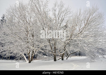 Amazing colors of the snowy forest in winter - Stock Image