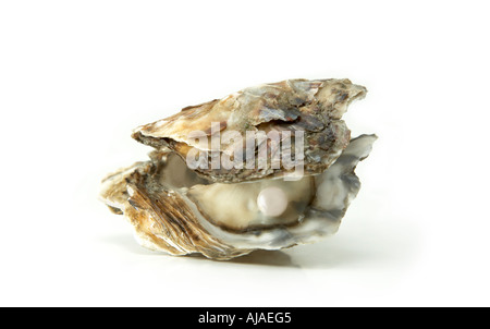 oyster shell pearl plain background white cut out cutout - Stock Image