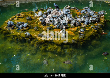 Athens, Greece. The National Garden is a large public park. Turtles in a pool. - Stock Image