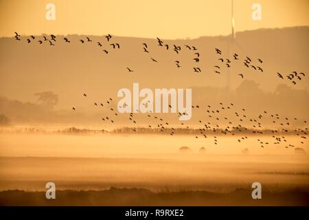 Pevensey Levels, UK. 28th Dec, 2018. UK Weather: Flocks of birds take off as the mist rolls across the Pevensey Levels this evening after a cold day in East Sussex, . Pevensey Levels, East Sussex, UK. Credit: Ed Brown/Alamy Live News - Stock Image