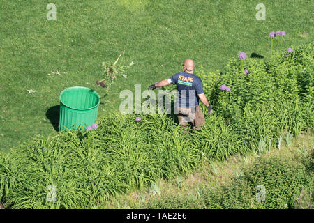 A gardener in Hudson River Park in the Tribeca neighborhood of Manhattan, New York City. The park runs for almost five miles along the Hudson River. - Stock Image