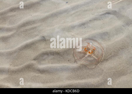 Pattern on the beach - Stock Image