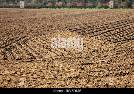 A field winter drilled in preparation for summer crop in North Norfolk at Blakeney, Norfolk, England, United Kingdom, Europe. - Stock Image