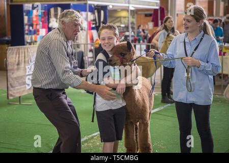 Sydney, Australia. 23rd Apr, 2019. A boy hugs an alpaca during the Sydney Royal Easter Show in Sydney, Australia, April 23, 2019. The Sydney Royal Easter Show is an annual show held in Sydney over two weeks around Easter. It is organized by the Royal Agricultural Society of New South Wales and was first held in 1823. The show comprises an agricultural show, an amusement park and a fair. Credit: Zhu Hongye/Xinhua/Alamy Live News - Stock Image