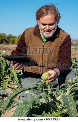 A farmer with a tablet supervises his crops crouching - Stock Image