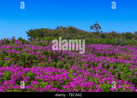 Cabo da Roca, Portugal - westernmost point of mainland Europe - Stock Image