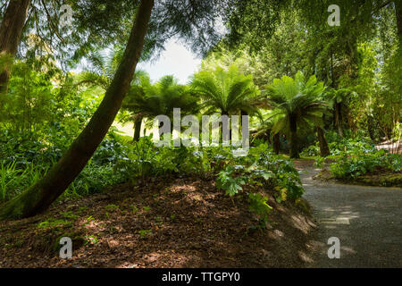 The sub-tropical Trebah Garden in Cornwall. - Stock Image