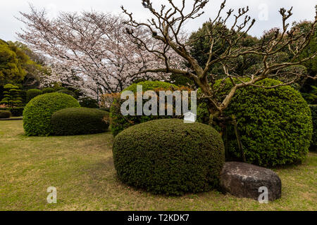 Sakura Cherry Blossoms at Bansuisou - Bansuisou was built by Sadakoto Hisamatsu as his personal villa in 1922. Hisamatsu had been stationed in France  - Stock Image