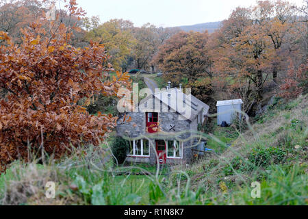 View of a converted barn house home stone cottage in autumn in rural  countryside with oak trees and oak leaves Carmarthenshire Wales UK  KATHY DEWITT - Stock Image