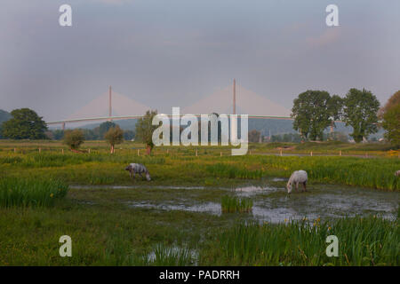 horses grazing in field with view of Pont de Brotonne (Brotonne Bridge) crossing the River Seine, Seine Maritime, north Normandy, France - Stock Image