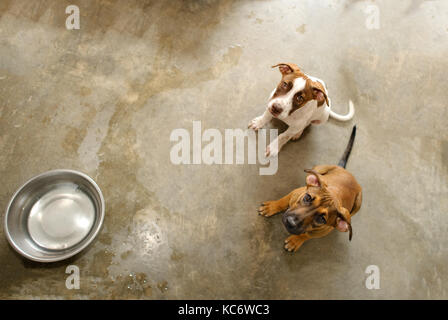 Dog shelter is an animal shelter with two cute dogs looking up wanting someone to take them home. - Stock Image