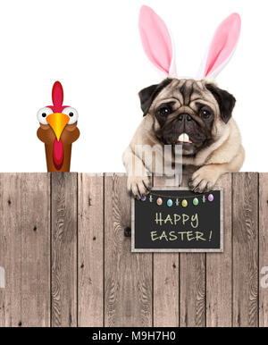 lovely pug dog with easter bunny ears diadem and chicken, with sign saying happy easter, isolated on white background - Stock Image
